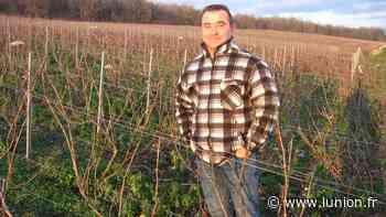 Du trèfle dans les vignes d'un viticulteur de Villiers-Saint-Denis - L'Union