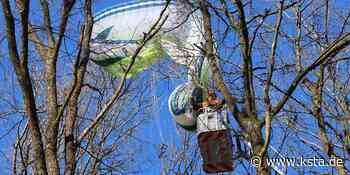 Much: Gleitschirmpilot aus Much muss aus Baum gerettet werden - Kölner Stadt-Anzeiger