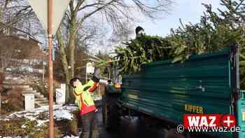 Netphen: CVJM sammelt Weihnachtsbäume in Dreis-Tiefenbach - Westdeutsche Allgemeine Zeitung