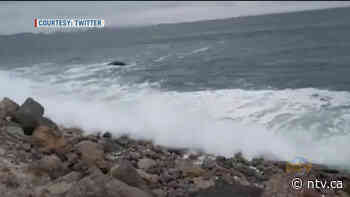 Town urges caution as sea swells threaten coast in Conception Bay South - NTV News