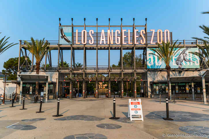 LA Zoo Reopens Today With More Coronavirus Safety Measures