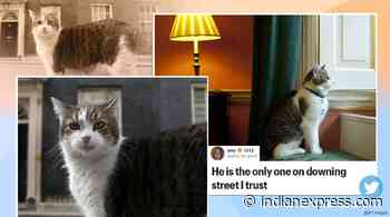 Larry the Cat celebrates 10 years at UK's 10 Downing Street - The Indian Express