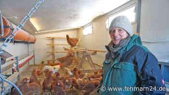 Fehmarns erster mobiler Bio-Hühnerstall - fehmarn24.de