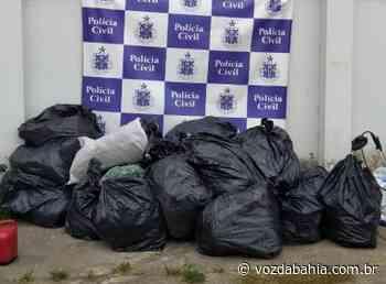 Senhor do Bonfim: Apreensão de 300 kg de maconha é realizada em fazenda da zona rural - Voz da Bahia