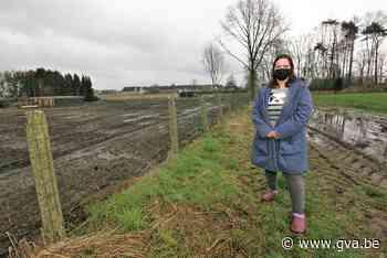 Gestolen paardjes gevonden, maar eigenares krijgt dieren nie... (Herselt) - Gazet van Antwerpen