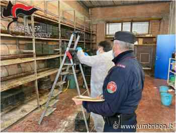 Torgiano, vendita illegale di uccelli: trovati i responsabili - umbriaON
