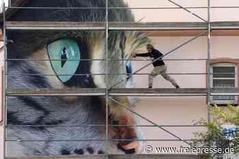 Strafzettel-Flut verärgert Graffiti-Künstler Tasso aus Meerane - Freie Presse
