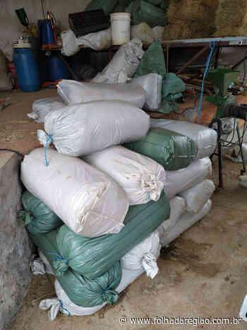 Silagem para pecuária leiteira é tema de curso do Siran em Clementina - Folha da Região