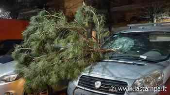 Albissola Marina, cade ramo di un albero: danneggiate due auto - La Stampa