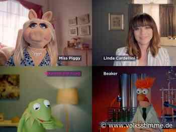 Miss Piggy hat jetzt einen Video-Blog - Volksstimme