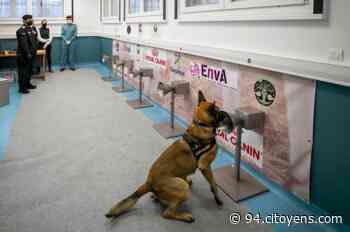 Maisons-Alfort: les chiens renifleurs au banc d'essai de la détection du Covid - 94 Citoyens