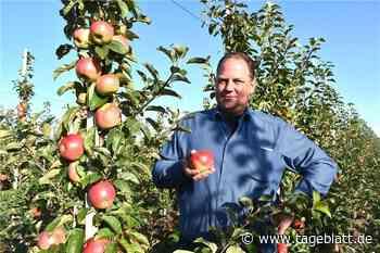 Obstbauern ernten jetzt Deichperle - Jork - Tageblatt-online
