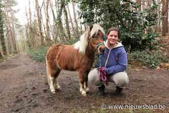 Inès betaalt 350 euro om gestolen miniatuurpaardje Angel terug te krijgen