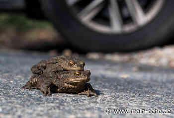 Naturschützer bereiten sich auf Start der Krötenwanderung in der Region Aschaffenburg vor - Main-Echo