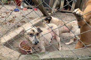 Mulher é presa por maus-tratos a animais em Quatro Barras - CBN Curitiba 90.1 FM