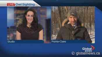 Bird watching in Pointe-Claire | Watch News Videos Online - Globalnews.ca