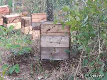 Argentino morre após ser atacado por abelhas em Itatinga - G1