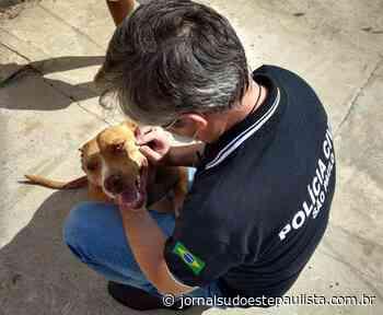 Polícia de Itatinga resgata cadela em situação de risco - Jornal Sudoeste Paulista