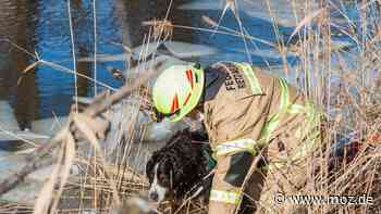 Eis-Rettung bei Neubrück: Notärztin aus Bad Saarow fällt ins eiskalte Wasser - Hubschrauber-Pilot fliegt nackt - moz.de