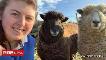 Young farmers and mental health: 'We feel so isolated'