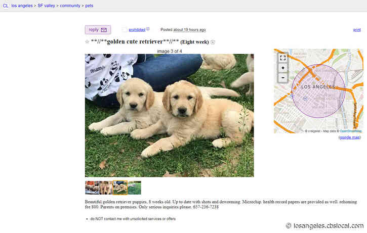 Downey Man Who Sold Sick Puppies To Pay $200K In Restitution To 63 Families
