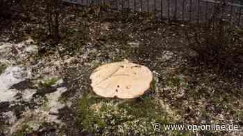 Egelsbach: Baum auf Spielplatz gefällt - Anwohner empört - op-online.de