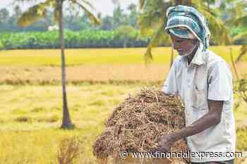 Centre buys paddy worth Rs 1.23 lakh cr so far this season at MSP; 94 lakh farmers benefitted