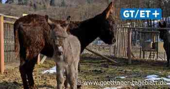 FDP-Politiker Christian Grascha fordert die Öffnung des Wildparks Hardegsen - Göttinger Tageblatt