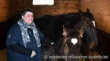 Pecq: Fabien se mobilise pour sauver des chevaux sur le chemin de l'abattoir - Sudinfo.be