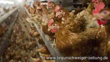 Geflügelpest: Russland: Impfstoff gegen H5N8-Vogelgrippe-Virus in Planung