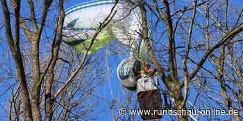 Much: Gleitschirmpilot aus Much muss aus Baum gerettet werden - Kölnische Rundschau