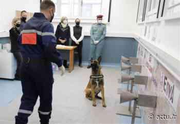 Val-de-Marne. Maisons-Alfort : des chiens pour dépister le Covid-19 ? - actu.fr
