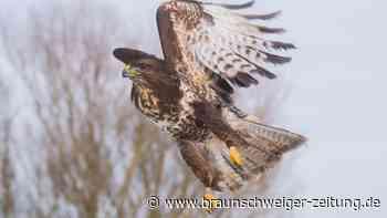 Vögel werden in Leiferde aufgepäppelt