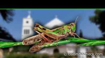 Fotos que muestran 'invasión de grillos' no fueron tomadas en Urumita, La Guajira - www.colombiacheck.com