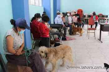 En Pelileo se realiza campaña de esterilización de mascotas - La Hora (Ecuador)