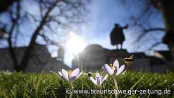 """Wetter: Erstmals über 20 Grad: """"Ilonka"""" sorgt für Frühlingsgefühle"""