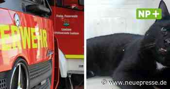 Tierretter der Feuerwehr Laatzen: Einsatz für Katze und Taube - Neue Presse
