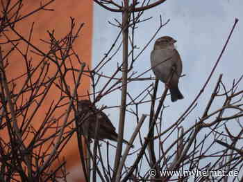 Hoch oben im Baum - myheimat.de
