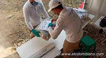 Reubicarán 416 cuerpos hallados en bolsas y baldes en Puerto Berrío - El Colombiano