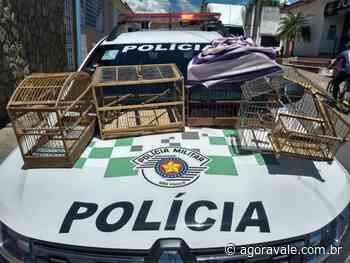 Homem é preso em flagrante por caça ilegal em Cachoeira Paulista - AgoraVale