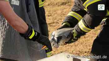 Feuerwehr in Escheburg befreit Graureiher aus einer Leine - Hamburger Abendblatt