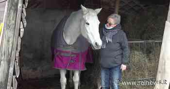 Al rifugio del cavallo a Montereale Velcellina serve una mano - TGR Friuli Venezia Giulia - TGR – Rai
