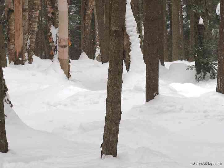 Gore Mountain: Packed Out Trees
