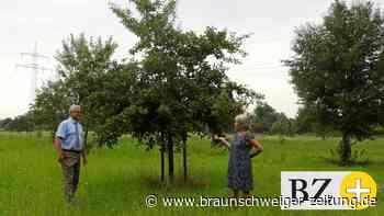 Insektenschutz: Gemeinde Vechelde sieht sich gut aufgestellt