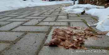 Debatte über Hundekot auf Fußwegen und Plätzen in Thale: Vielen Halter fehlt es an Schuldbewusstsein - Mitteldeutsche Zeitung