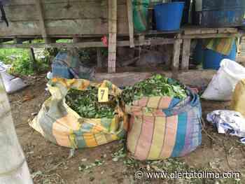 Destruyen laboratorio de coca ubicado en San Vicente del Caguán - Alerta Tolima