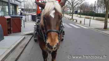 EN IMAGES - Queteur, le cheval qui collecte les déchets alimentaires à Stains - France Bleu