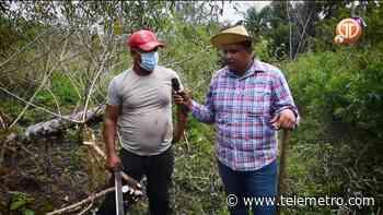 Cosecha de ñame y yuca en Ocú - Telemetro