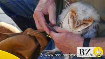 Wolfenbüttel: Freiwillige engagieren sich für Naturschutz