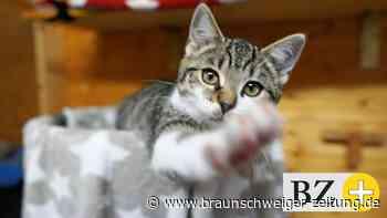 """Auch Katzenfreunde Königslutter merken den """"Trend Haustier"""""""